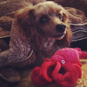 Auntie Karen got me my lobster when she got her dog, Gus, his toy.  Pawesome!